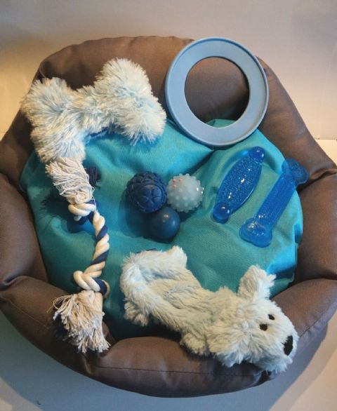 BABY BOY BLUE PUPPY STARTER SET WITH WATER RESISTANT BED & BABY BLUE PUPPY TOYS